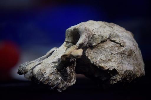 初期人類の頭蓋骨発見、380万年前 人類進化の理解に新たな鍵