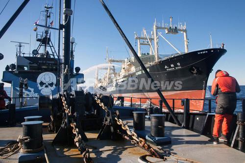 シー・シェパードは「海賊」、米控訴裁が認定