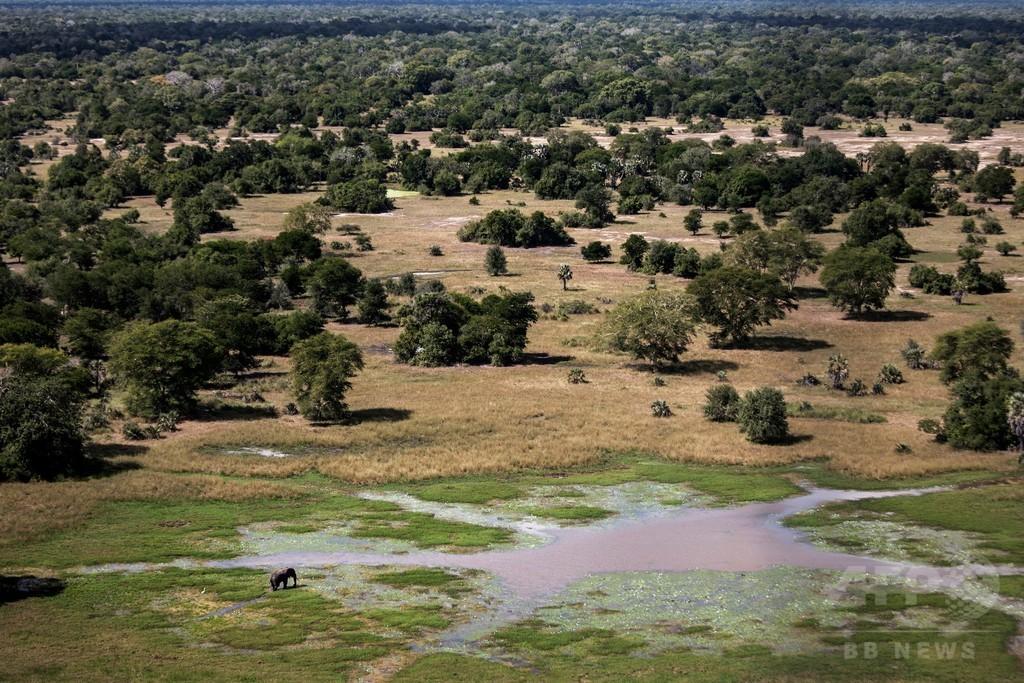 戦争による野生動物への負の影響、絶滅危機にも 米研究