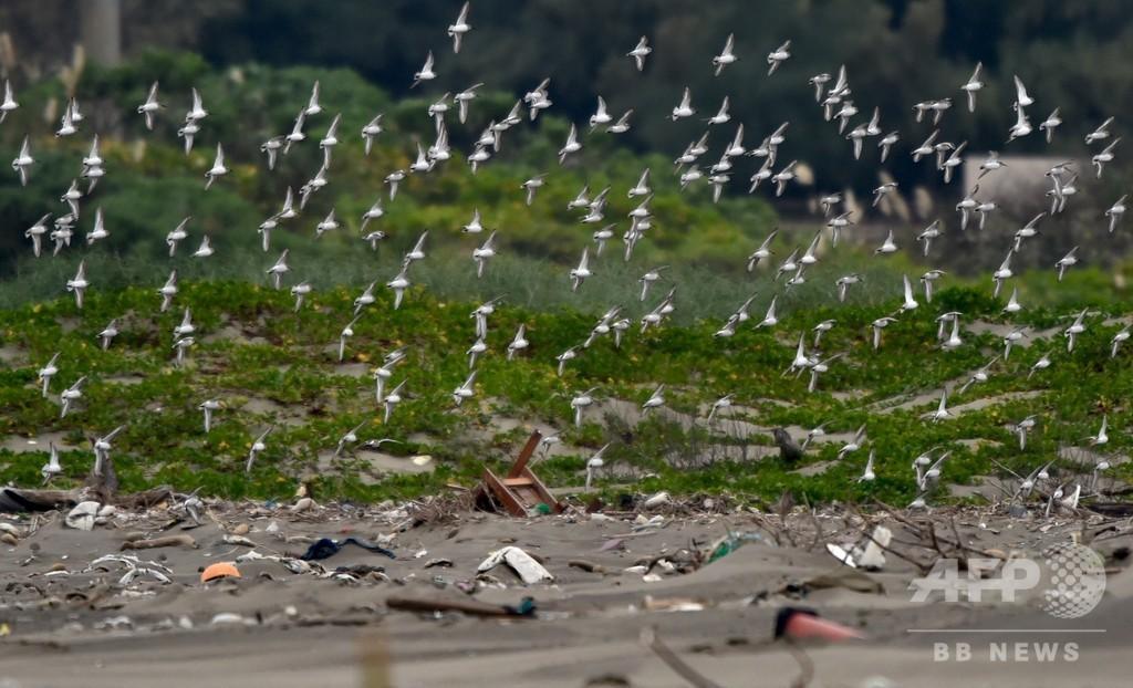 世界の湿地、森林の3倍の速さで消滅 ラムサール条約初の報告