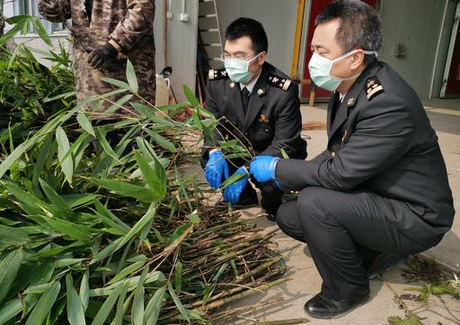 新型肺炎との闘いの中でも…パンダの餌の輸出を優先 中国・成都税関