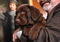 15年の米人気犬種、1位はラブラドルレトリバー 25年連続