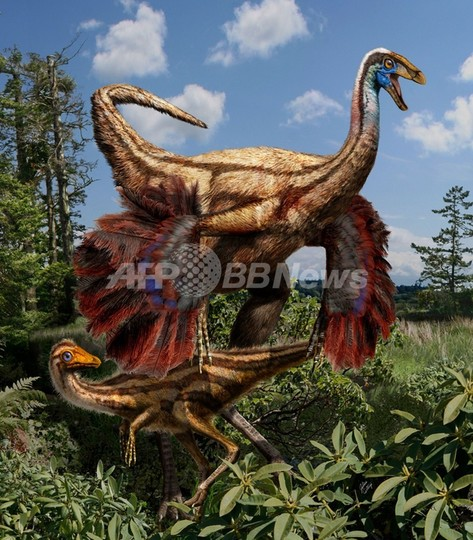 羽毛恐竜の化石をカナダで発見、米大陸で初 羽毛は繁殖に使う?