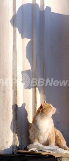 ネコ奪い取り壁に投げつけた男に懲役7月、ロシア