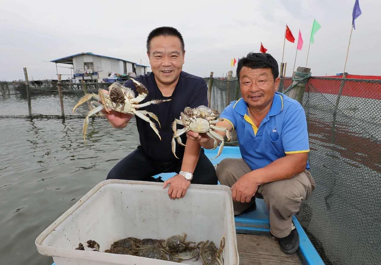 陽澄湖で「上海ガニ」漁解禁、水揚げ量1万トン超見込む 江蘇省
