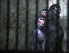 複数の動物急死で動物園閉鎖、原因は不明 ブルガリア