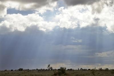 野生「クロヒョウ」の撮影に成功、アフリカでの生息確認 研究