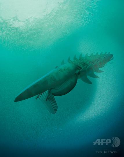 最古のろ過摂食動物化石発見、4億8000万年前の新種