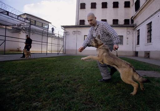 囚人と捨て犬が助け合う、ハンガリーの刑務所
