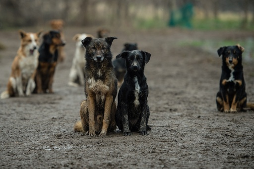 犬450匹の名前を覚え保護する活動家、セルビア