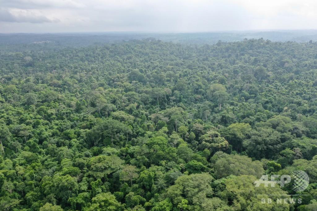 アフリカ熱帯植物種、3分の1が絶滅危機に 研究