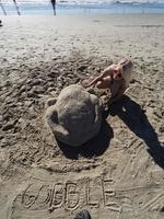 ビーチで砂の七面鳥 感謝祭控え記録的な暑さ 米カリフォルニア