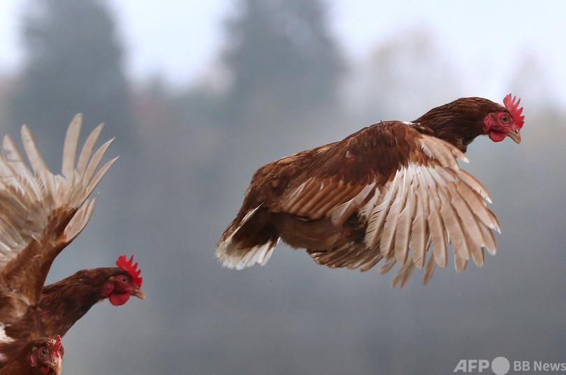 鳥 インフルエンザ と は