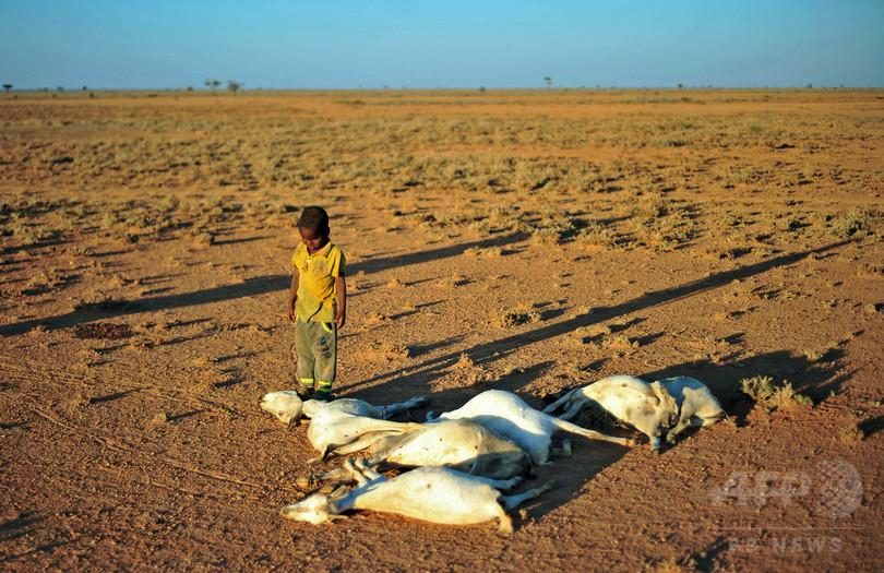 アフリカの角、1700万人が飢餓に直面 雨不足で深刻な干ばつ