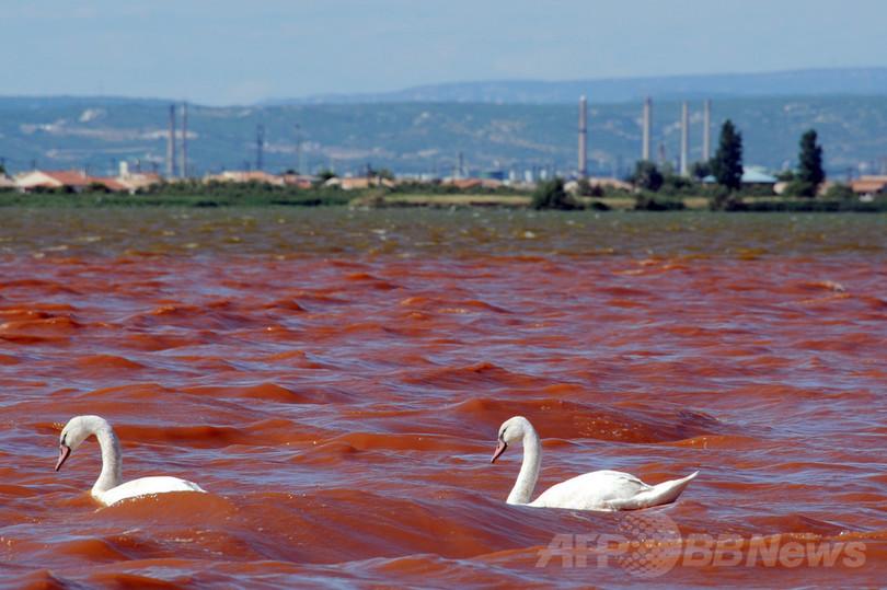 特集】世界各地の水質汚染 写真29枚 国際ニュース:AFPBB News