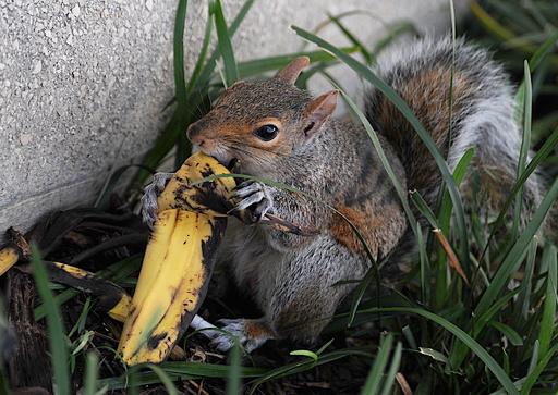 「バナナの皮ポイ捨て神話」をぶっ壊す、米国立公園