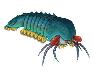 約5億年前のサソリやクモの祖先を発見 中国科学院の研究所