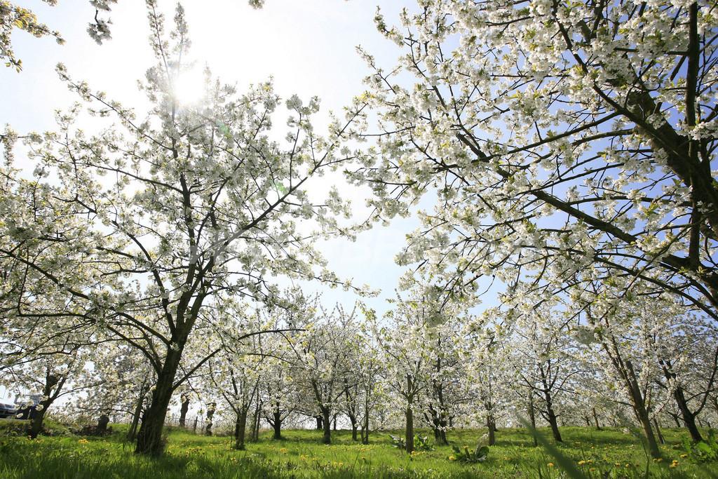 絶好のお花見日和、ドイツ北部