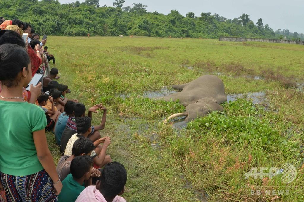インドの水田でゾウの死骸発見、感電死か