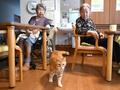 動画:「離れたくない」高齢飼い主の切実な思い、ペットと入所できる特養 神奈川