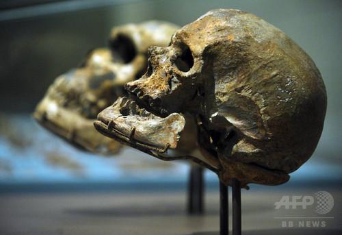 初期現生人類、欧州でもネアンデルタール人と交配か 研究