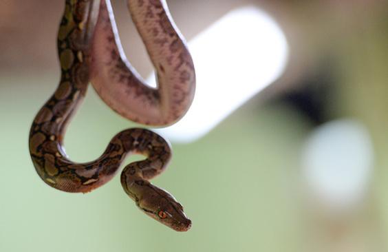 シャネル、わに・蛇革の使用廃止 高級ブランドで初