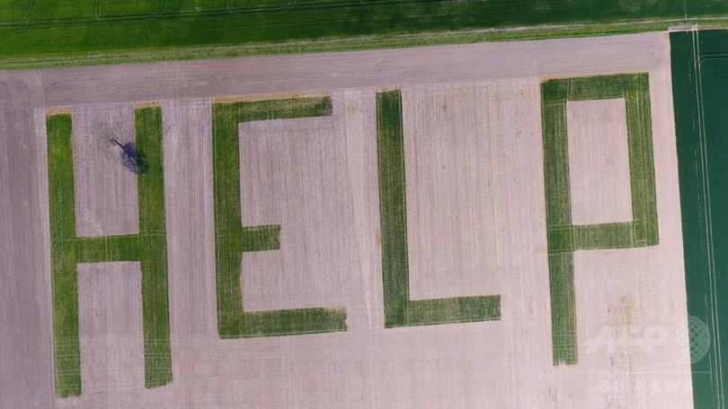 小麦畑に巨大な「HELP」 大統領選目前のフランス
