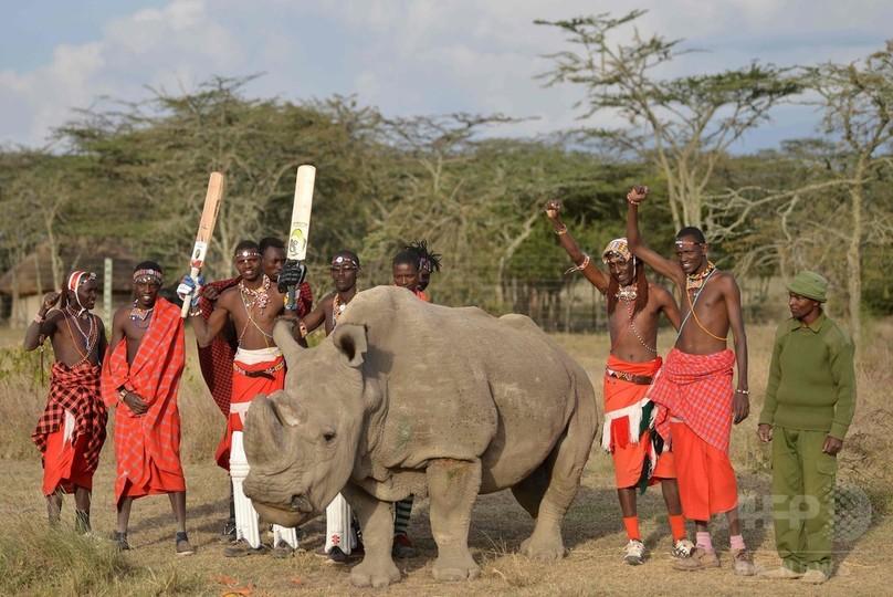 最後のキタシロサイの雄が安楽死、残りは雌2頭に ケニア