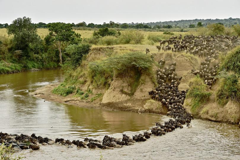 【AFP記者コラム】太古の昔を垣間見る──ケニア取材の醍醐味