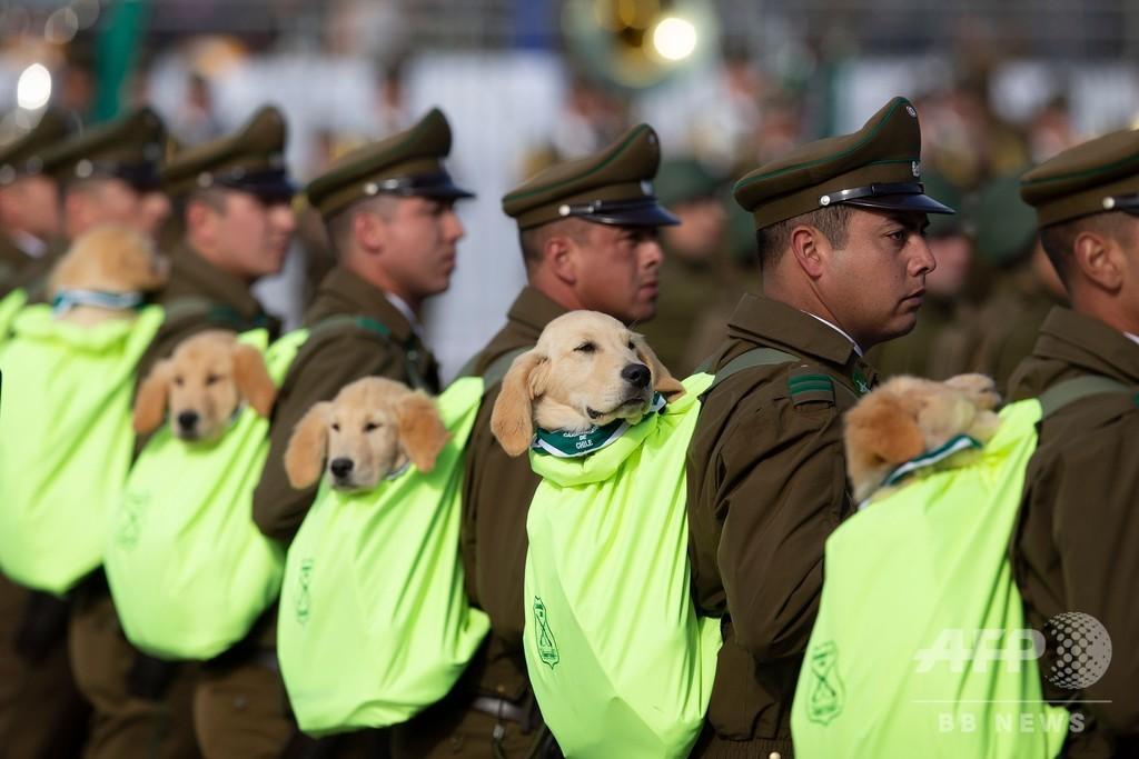 「どんな捜査も任せて…?」 警察犬の卵、担がれて軍事パレード参加