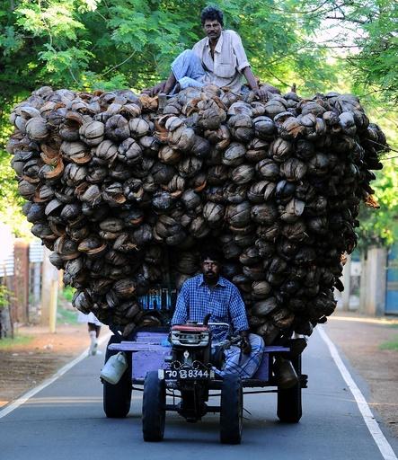 山のように積んだココナツの皮を運ぶ農民たち、スリランカ