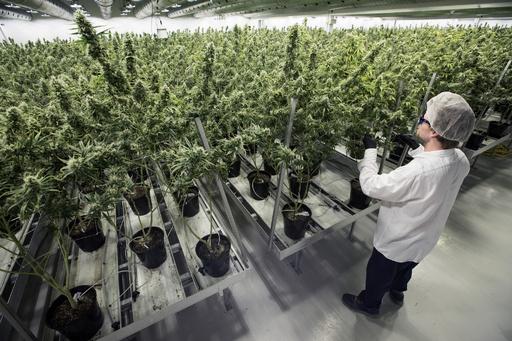 カナダ大麻解禁、ウルグアイに見る社会への影響 合法化3年
