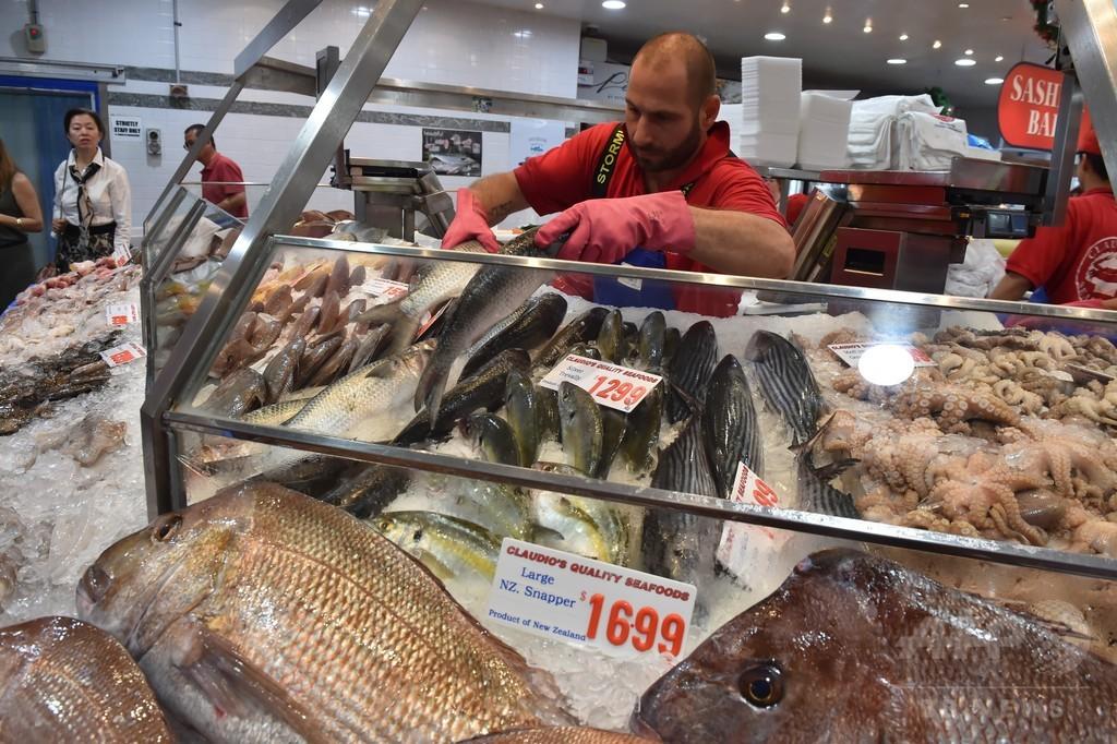 オーストラリアで魚の数が大幅減少、20センチ超の種では3割減 研究