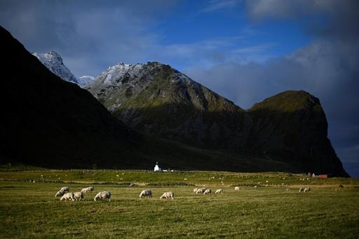 羊100匹余りが川に流される 豪雨で河川氾濫 ノルウェー