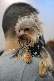 ブラジル裁判所、破局後も愛犬に会う機会認める 飼い主の元カップルに