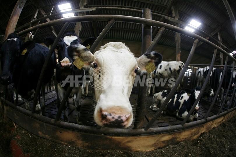 気候変動で家畜の病気が増加、人間への危険も 国際獣疫事務局