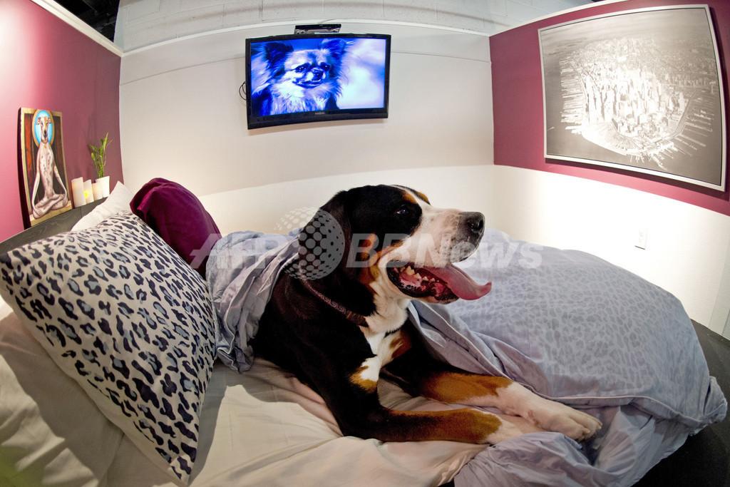 米NYに愛犬専用リゾートホテル、液晶テレビやフィットネス施設も完備