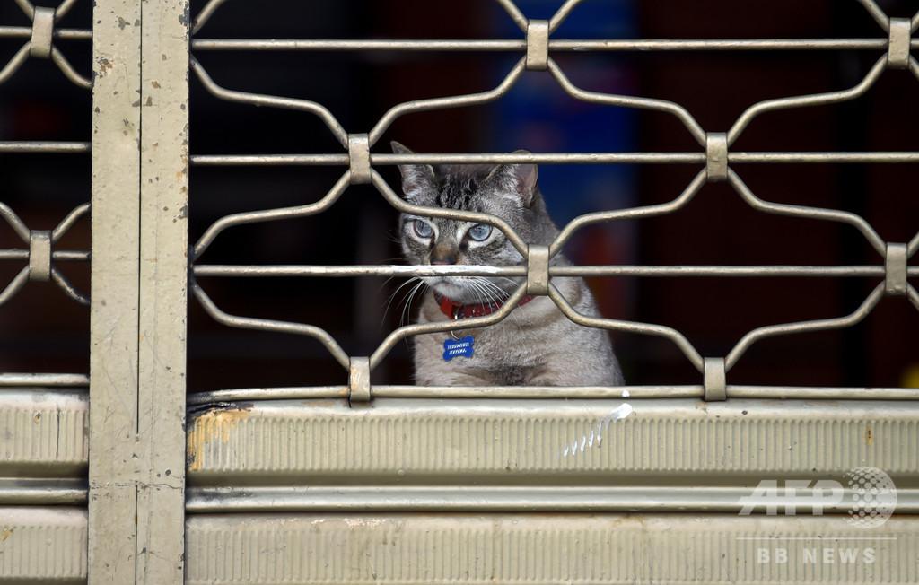 飼い主がアパート立ち退き、猫110匹すみか失う スペイン