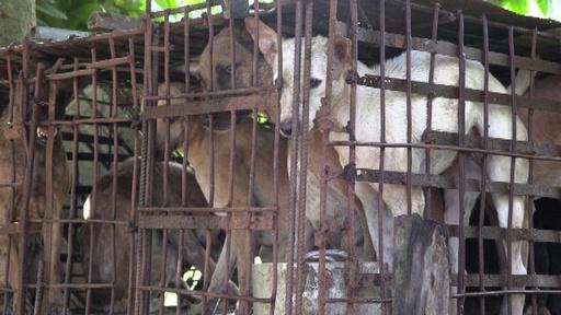 動画:「これは罪だ」 カンボジアに広がる闇の犬肉産業