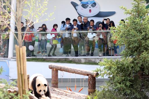 チベット高原に初の「パンダ館」がオープン
