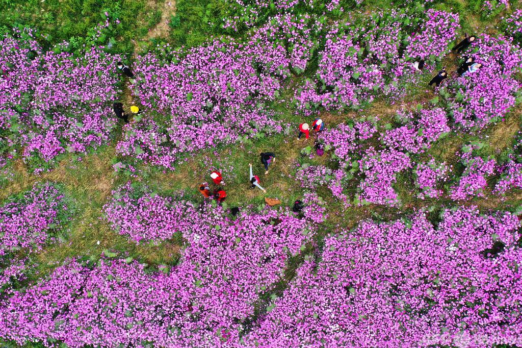 色とりどりに花咲く江西省の「花海」公園 市民たちが「日常の喜び」を堪能