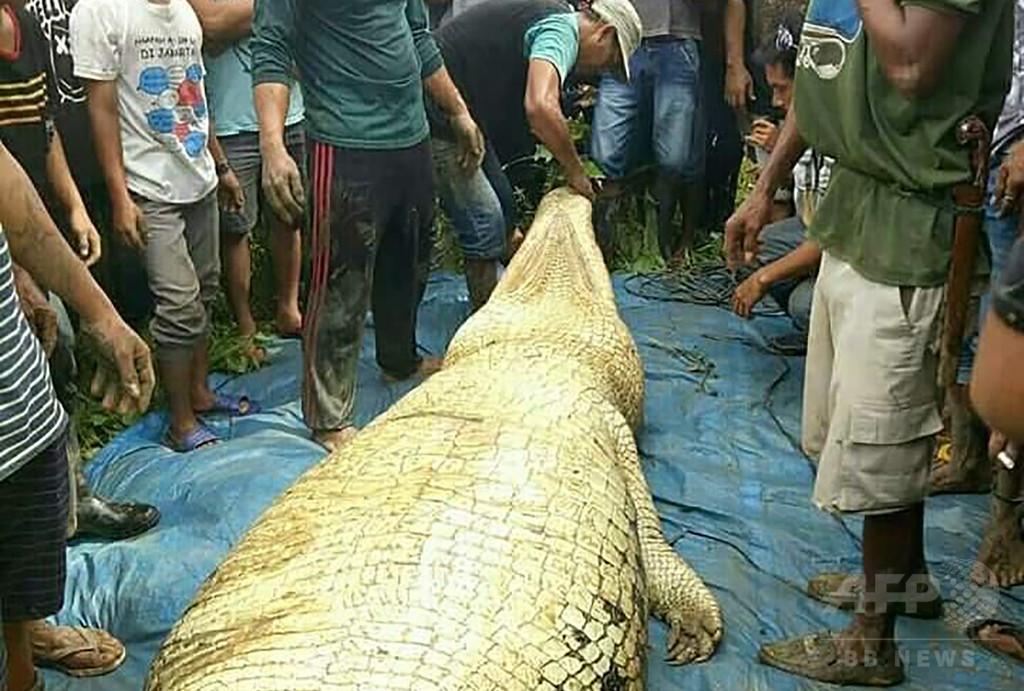 巨大ワニの体内から人の脚と腕、行方不明だった男性か インドネシア