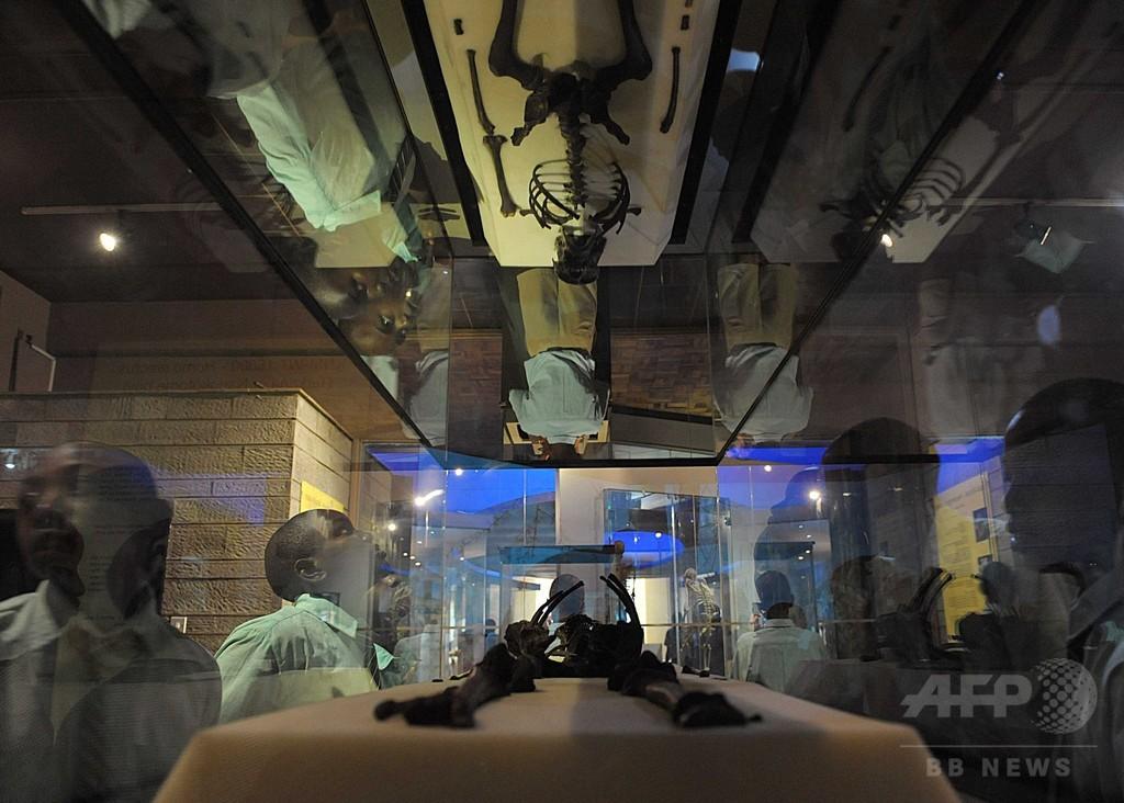 初期ヒト属、210万年前にアジアに存在か 石器年代測定