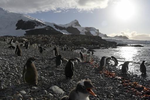 ペンギンやアザラシのふん、南極の生命繁栄の支えに 研究