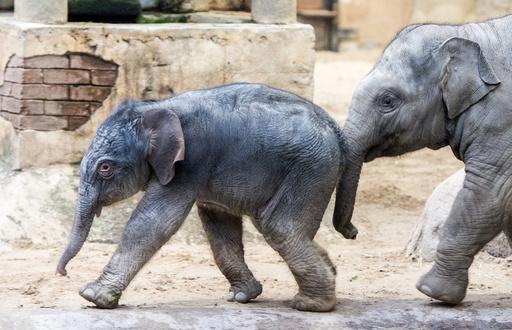 【写真特集】世界各地で撮影された愛くるしい子ゾウ