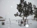 エジプトに雪、中東に「冬の嵐」