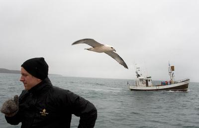 クジラ肉原料ビール、製造禁止に アイスランド
