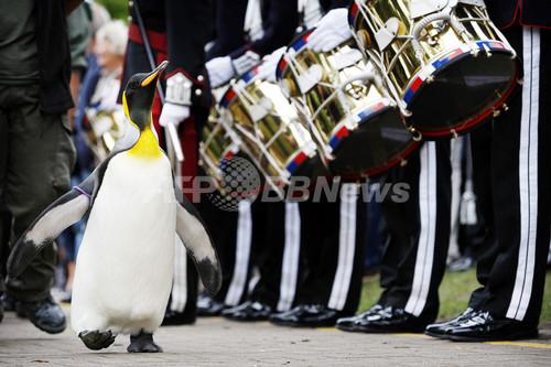 スコットランドのオウサマペンギン、ノルウェー近衛連隊から爵位