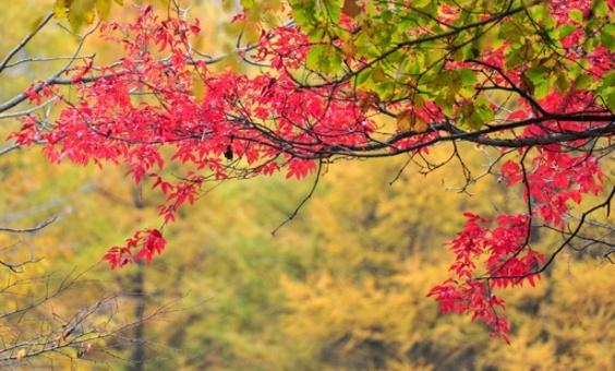 遼寧・森林公園、紅葉シーズン迎える