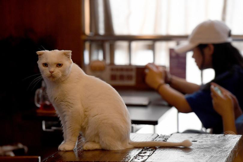 広西チワン族自治区にも猫カフェ